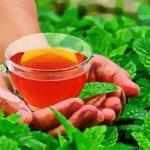 6 היתרונות של תה מנטה שלא סיפרו לכם מעולם!