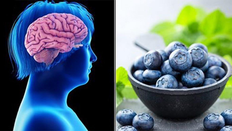 יתרונות האוכמניות על בריאות המוח