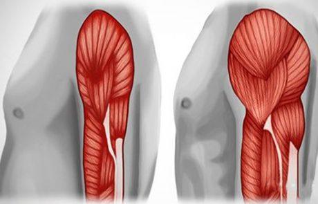 4 דרכים למניעת אובדן מסת השריר עם התקדמות הגיל