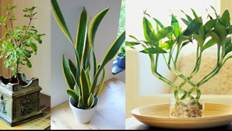 7 צמחים שממגנטים אנרגיה חיובית בבית ובמשרד!