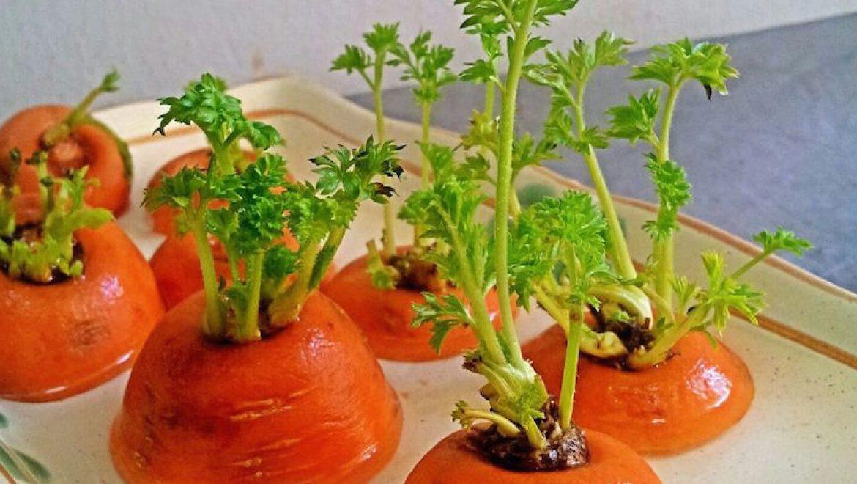 10 מזונות שאתם יכולים לגדל לבד מחדש בבית באופן טבעי