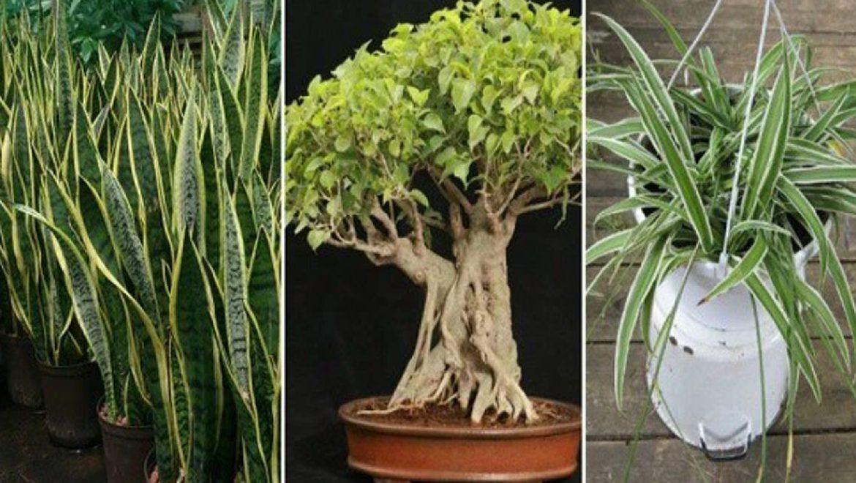 שלושה צמחים שמייצרים חמצן גם בלילה – שימו אחד בחדר השינה שלכם!