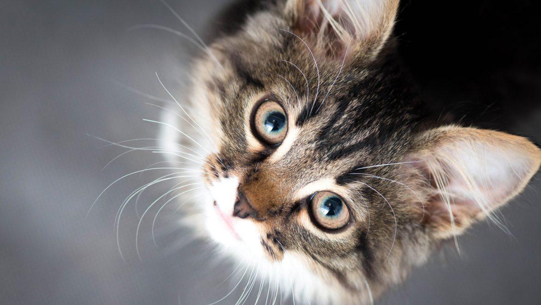 10 שיעורים שאנחנו צריכים ללמוד מבעלי חיים