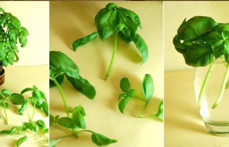 10 עשבי תיבול שניתן לגדל בתוך הבית בעזרת מים בלבד
