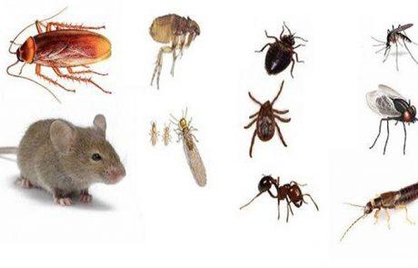 6 דרכים פשוטות שיסלקו את החרקים מהבית שלכם (ללא כימיקלים)