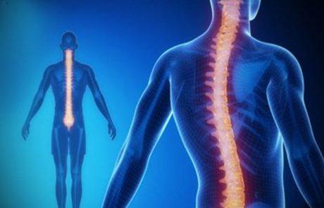 9 דרכים יעילות לחיזוק עמוד השדרה שלכם