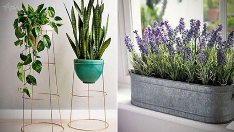 9 צמחי מרפא שנלחמים בלחץ וחרדה באופן טבעי !