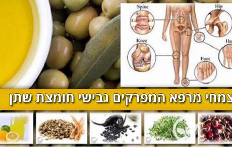 צמחי המרפא האלה מרפאים חומצת שתן בדם ומונעים שיגדון וכאבי פרקים